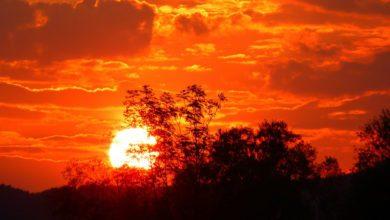 ارتفاع درجات الحرارة, موجات الحر, دراسات علمية, الاحتباس الحراري, الوفيات