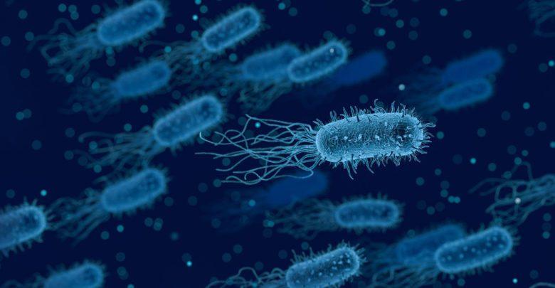 بكتيريا, عملية زراعة القلب, بيولوجي