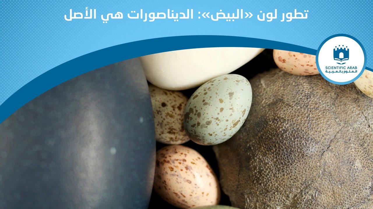 بيض ملون, أخبار العلوم, كبسولة, بيولوجي, حشرات, صراصير, بيض