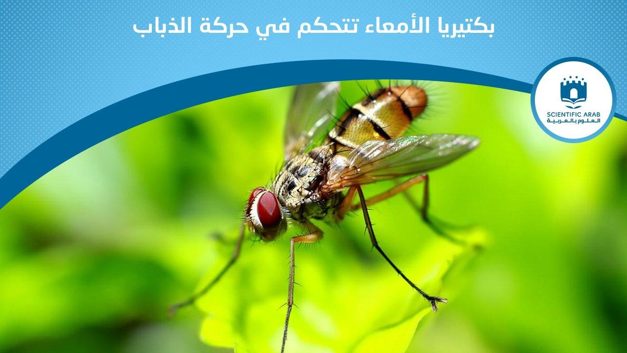 الذباب, أخبار العلوم, كبسولة, بيولوجي, حشرات