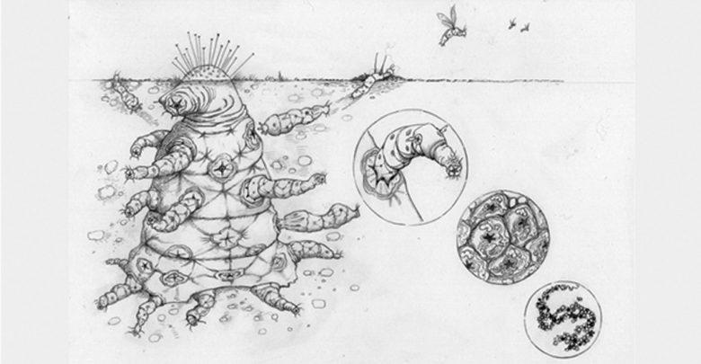 الأوكتومايت, التطور, الانتقاء الطبيعي, بيولوجي, كائن فضائي