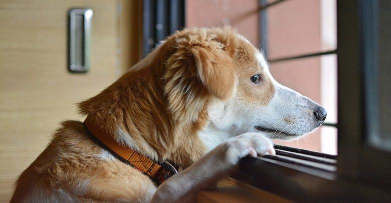 حيوانات, ألم الحيوانات,كيف تشعر الحيوانات بالألم, ألم