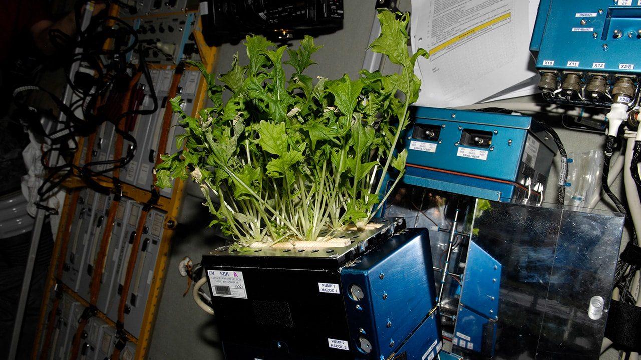 ناسا, نبات, بذرة قطن, الصين, فضاء